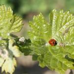 Nützlinge kennen lernen und fördern © Bio Forschung Austria