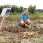 Erdäpfelernte © Bio Forschung Austria