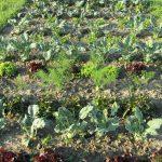 Bis zu 200 verschiedene Arten und Sorten Nutzpflanzen wachsen hier © Bio Forschung Austria