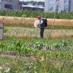 Dr. Hubert Zettl (Wildbienen-Experte des NHM-Wien) beim Wildbienen-Monitoring © A. Mrkvicka