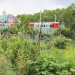 Nachbarschaftsgarten Löwenzahn im 20. Bezirk 2 © b2c media