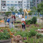 Temporäres Gartenlabor im Sonnwendviertel 2 © b2c media
