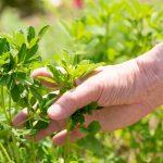 Ein Gespür für das Leben im Garten entwickeln
