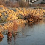 Trockenbiotop Am Wechselkrötenteich Teich