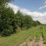 Mehrnutzungshecke und angrenzende zur Gemüse- und Kräuterproduktion genutzte Fläche © Bio Forschung Austria