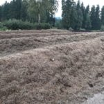 Betrieb Johannes Bergsmann, Kompostmieten aus Kleegras und Kräuterernteabfällen mit Kohlebeigaben im Versuch © Bio Forschung Austria
