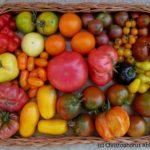 Tomatenvielfalt (c) Christophorus Ableidinger