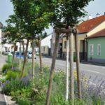 Öffentliche Verkehrsgrünflächen (c) Elisa Millonig, Natur im Garten